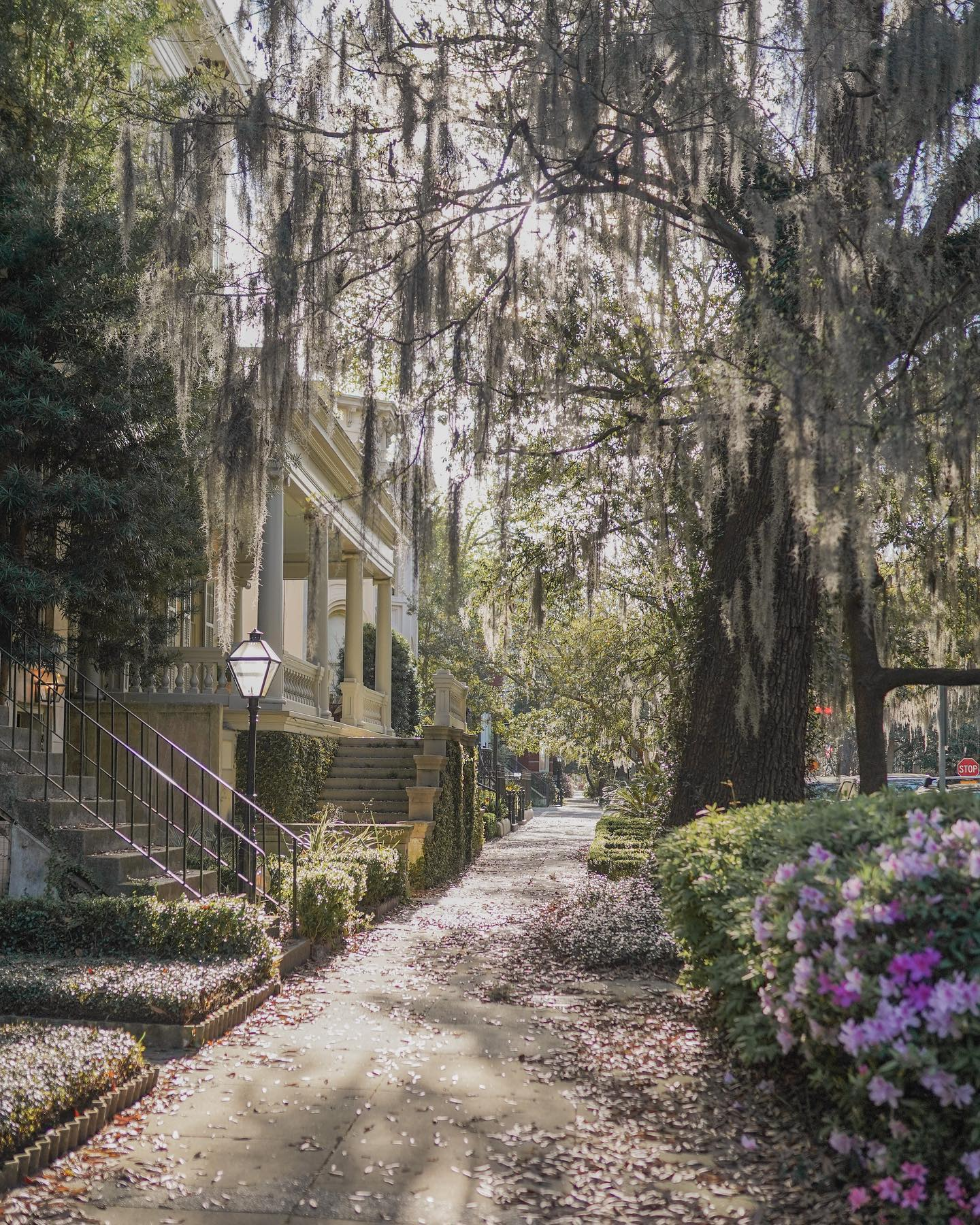 what to see & do savannah travel guide